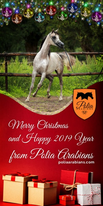 Merry Christmas from Polia Arabians!